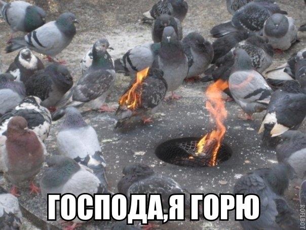 http://cs14112.vk.me/c540105/v540105123/9848/eWkTxk3_veY.jpg