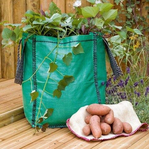 Как готовить компот из сухофруктов для ребенка