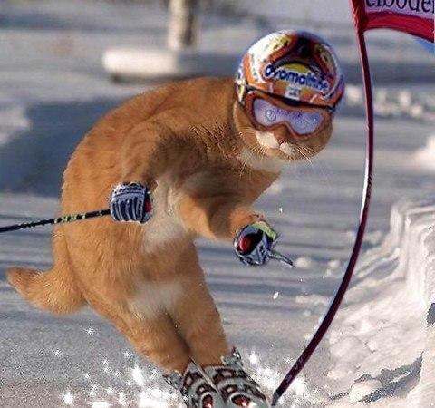 Этой олимпиаде не хватает котиков, фото приколы и картинки