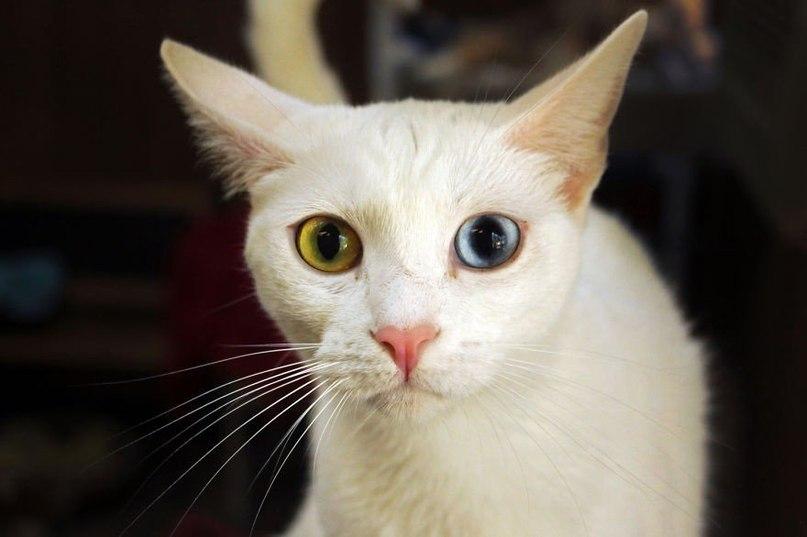 Коты и кошки из балета коты в сапогах - 85d