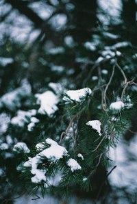 Отцвели цветы, падают листья, птицы молчат, лес пустеет и затихает.ОСЕНЬ. - Страница 15 AtuJNt4Qnz4