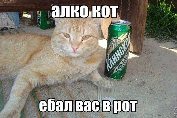 zhestko-ebut-vsey-tolpoy