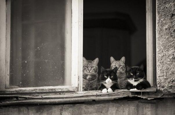 Cинхронные коты или copy-paste на котах: ↪