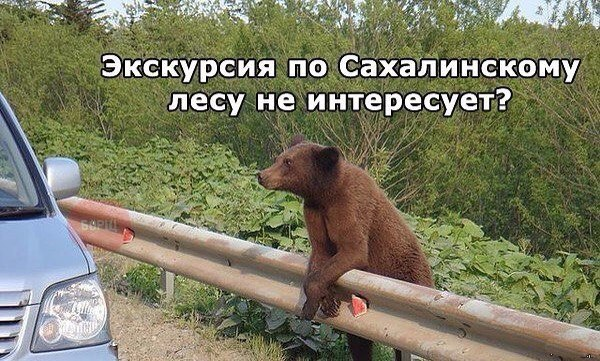 http://cs7051.vk.me/c540105/v540105596/3289b/ydIUq795AzY.jpg