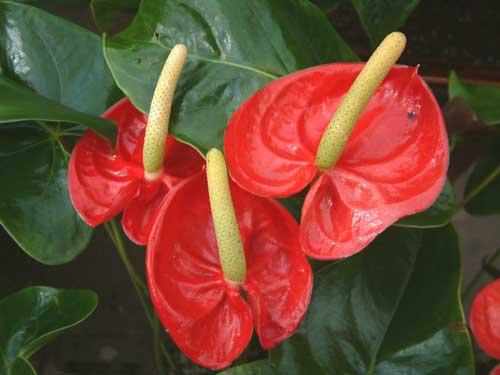 Цветок похожий на каллы