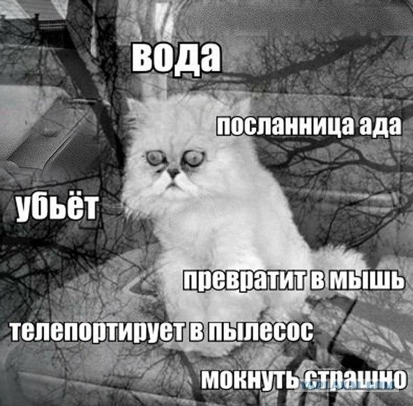vxPKrVrwGR0.jpg