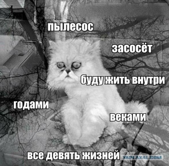 nKN_Qoe5cCg.jpg