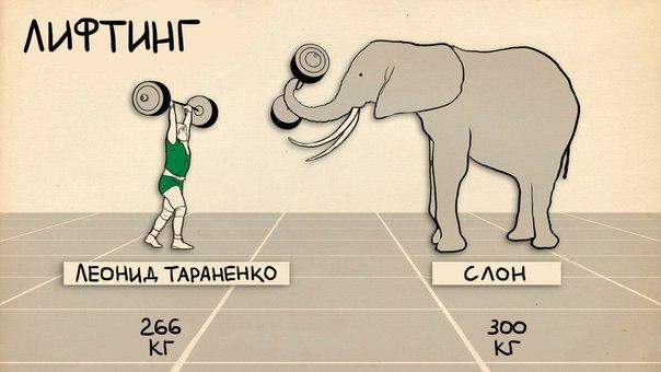 Сравнение силы и скорости животных и человека!