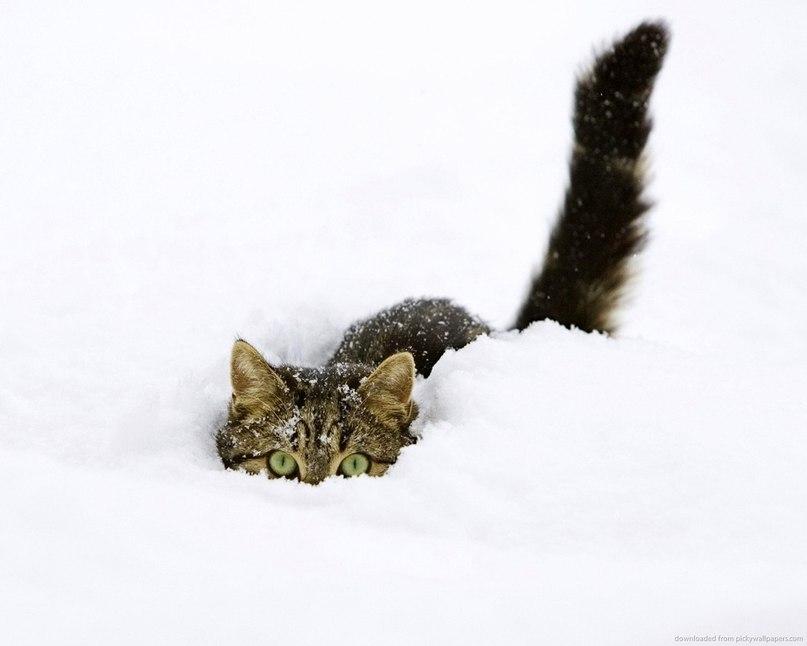 котэ и снег