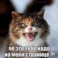 Анкета Александр Суровикин