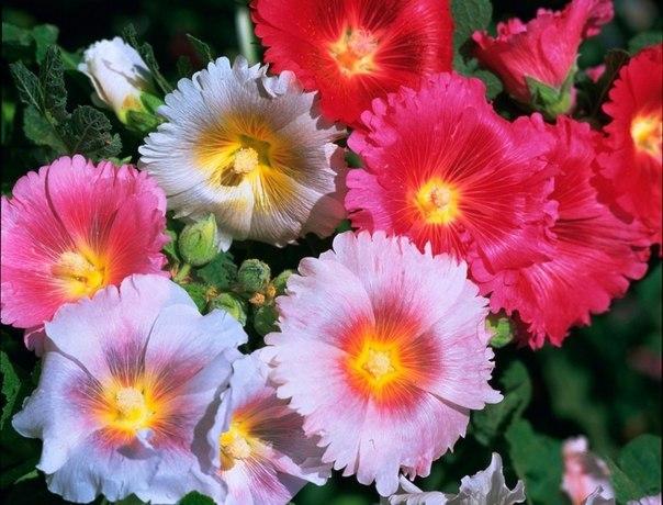 Résultat d'images pour Bouquet de fleurs des champs