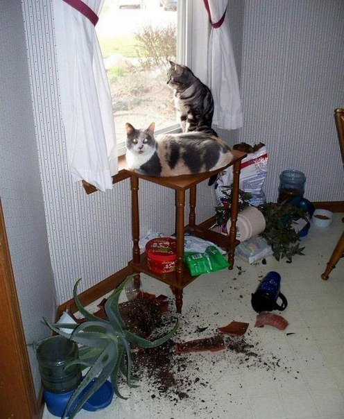 Кошачий юмор - Страница 15 F8MeOsYiBbk