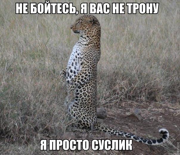 https://cs7063.vk.me/c540105/v540105940/28ded/6dE34mjpZl0.jpg