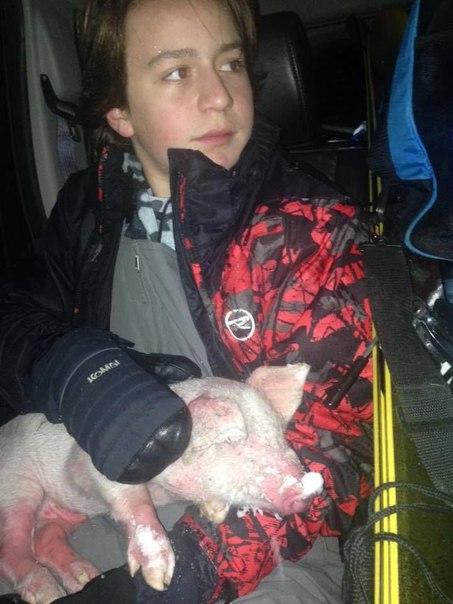 Этот поросёнок едва не замёрз до смерти в снегу, но, к счастью, был вовремя спасён