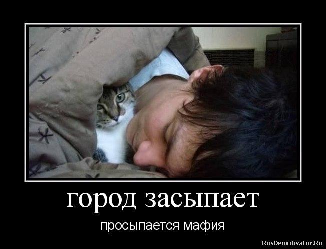Картинки про животных кошек буйные кудри также