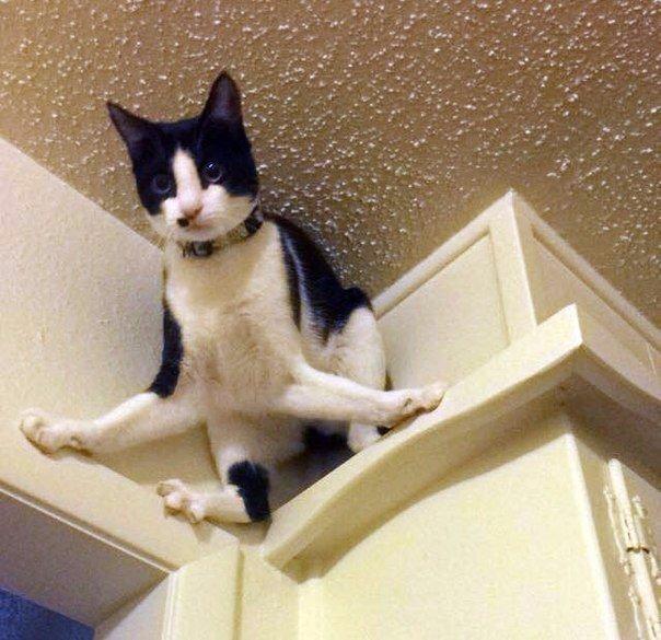 Когда в доме проснулось чудовище по имени Пылесос.