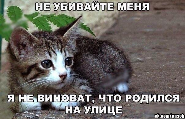 Репост, если против насилия над животными!