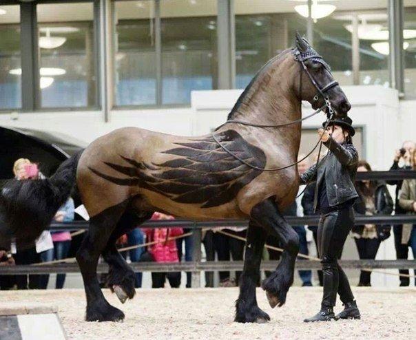 Что делать если лошадь козлит? - Форум