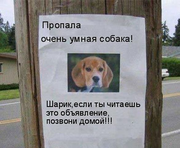 http://cs14106.vk.me/c540106/v540106187/25065/P_Pj6oVrGSk.jpg