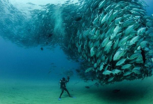 Девід Кастро і косяк риб фото