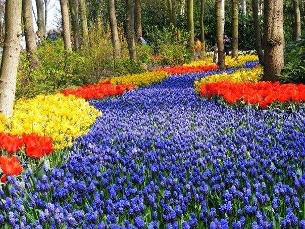 Весенние сады Кейкенхофф, Нидерланды