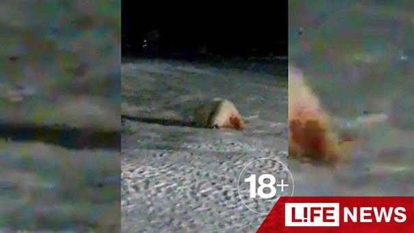 Низкосрачка лариса видео фото 687-377