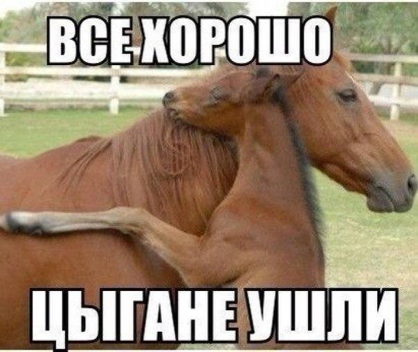 zpf_UUI3BXU.jpg