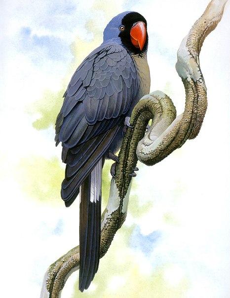 Вымершие и уничтоженные виды попугаев и других птиц _jCMPq-9ns8