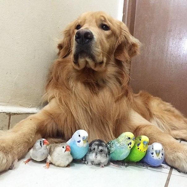 Пес, хомяк и несколько птиц... чудеса дружбы