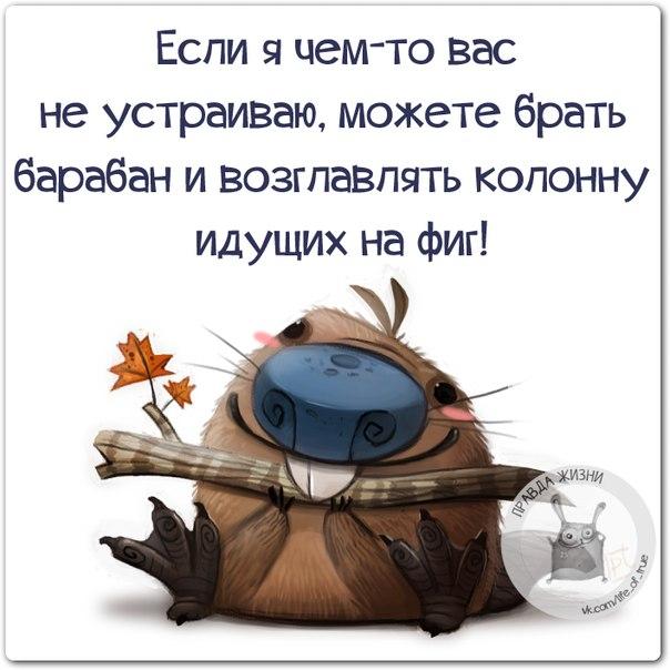 http://cs7054.vk.me/c540106/v540106334/27ad7/JPYClNxwbUE.jpg