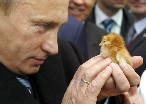 Животных не обманешь... они не даются в руки злым людям...