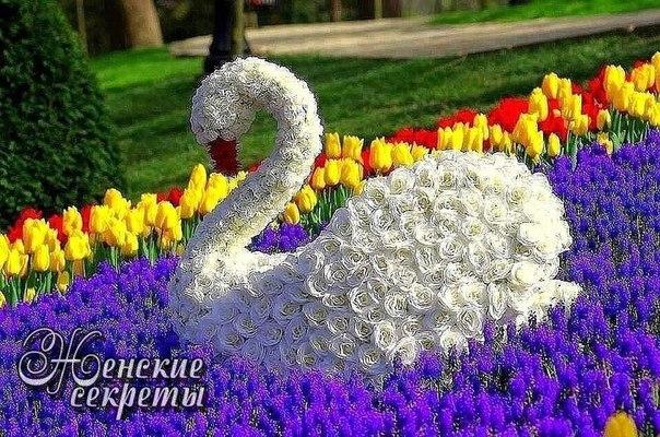 Красота из живых цветов.