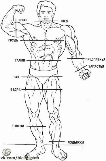 фото обхват плеча как измерить