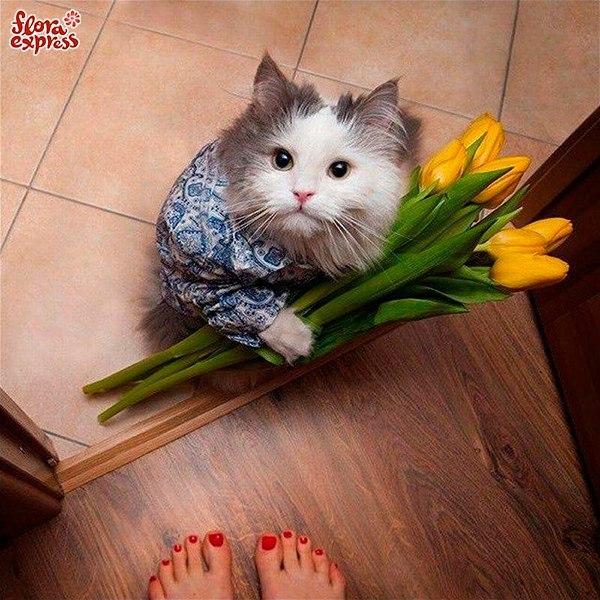 Наступил женский праздник, а вы забыли купить цветы