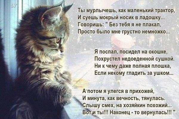 https://cs7050.vk.me/c540106/v540106609/34736/omkbNLBn8Ho.jpg