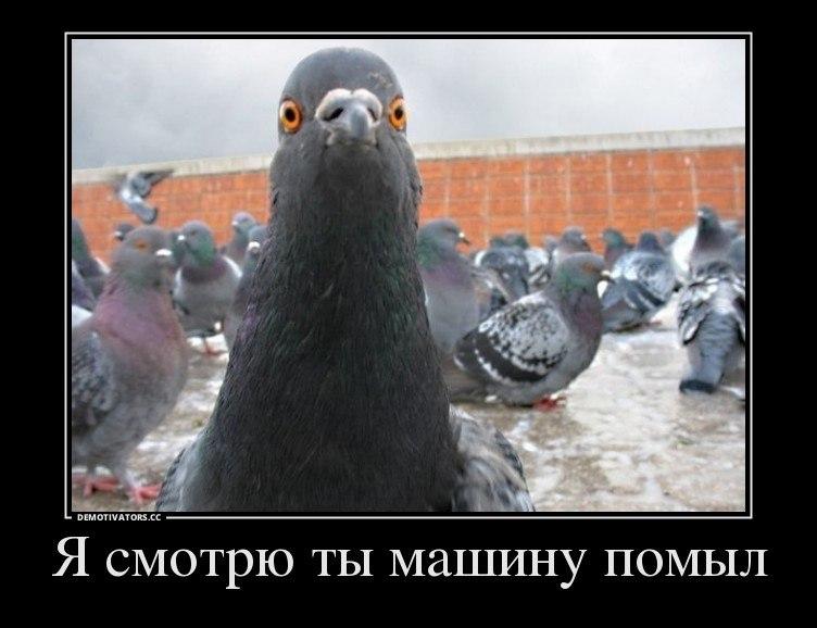 Фото площади аржемирского в невельске дело это