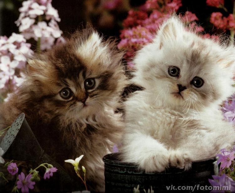 Котята открытки привет