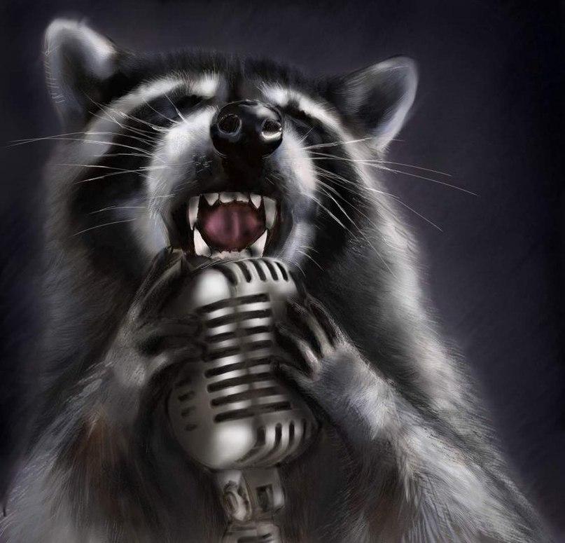 енот поёт