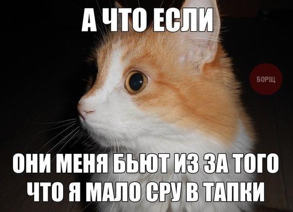 X0bvJcqvx08.jpg