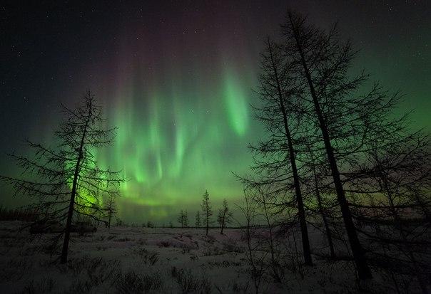 Северное сияние в Ямало-Ненецком АО. Автор фото — Андрей Снегирёв