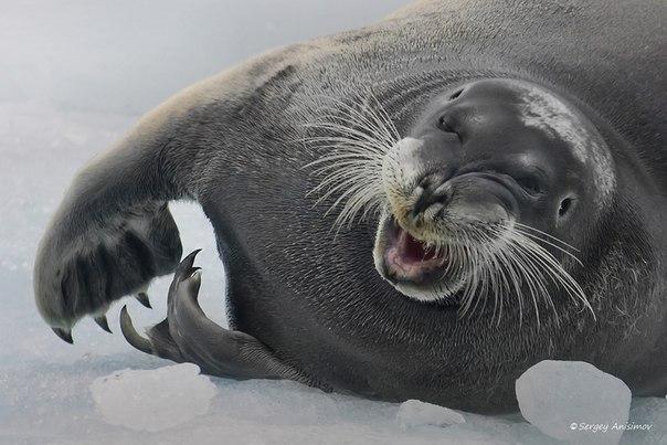 «В Арктике у всех хорошее настроение!» Автор фото — Сергей Анисимов: Хороших выходных!