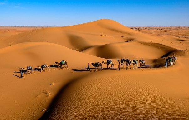 «Караван». Пустыня Сахара, Марокко. Автор фото — Сергей Пестерев