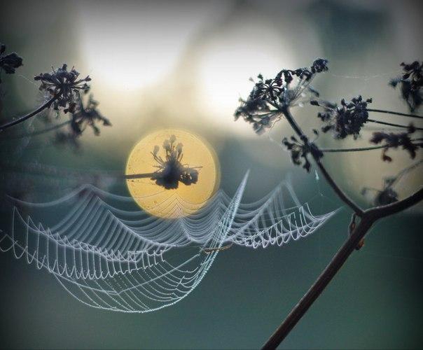 Автор фото — Михаил Садиков: Доброй ночи!