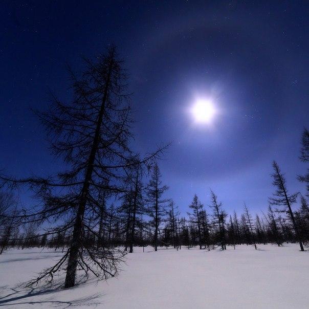 Камиль Нуреев, автор фото: «Мир полон красоты и необычных природных явлений. На фото — лунное гало в небе над лесотундрой Ямало-Ненецкого АО. 31 января 2015 года».