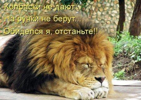 https://cs7060.vk.me/c540106/v540106856/2424a/TtcT4dTY4yU.jpg