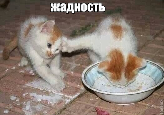 http://cs7055.vk.me/c540106/v540106856/26f57/6tzSrJfBwZE.jpg