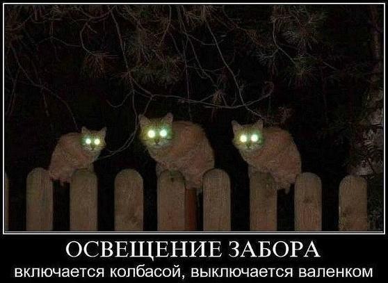 http://cs7052.vk.me/c540106/v540106856/292ce/2nPOM8LA1J0.jpg