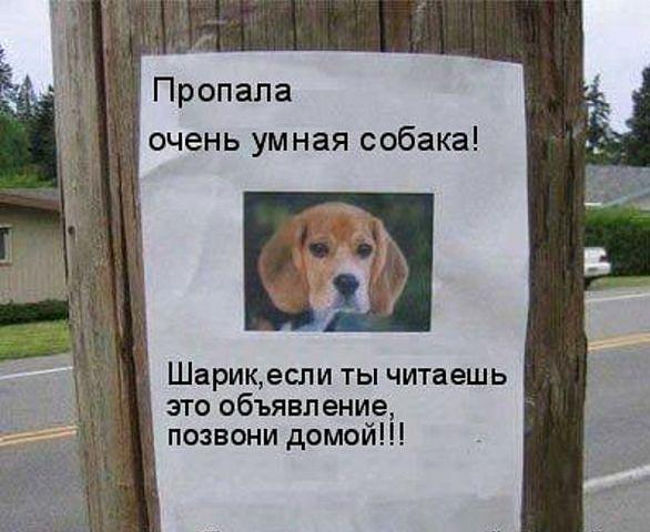 https://pp.vk.me/c540106/v540106927/19db0/BAIEYHSMH2I.jpg
