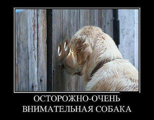 http://cs14106.vk.me/c540106/v540106940/32025/NnBUfJTYMzI.jpg