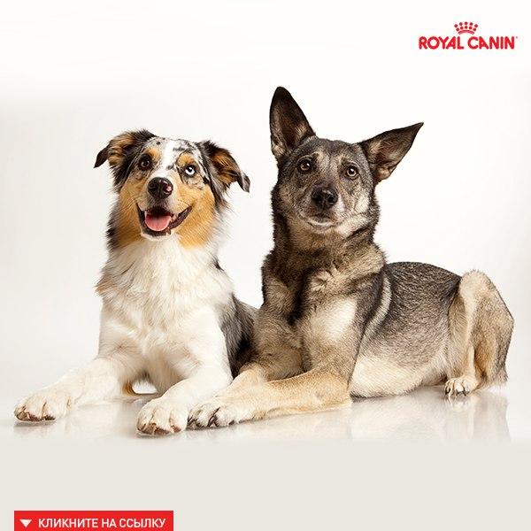 Рассказываем, как ухаживать за полостью рта у собак и как предотвратить заболева...
